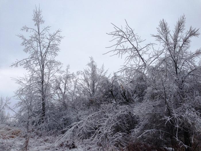 Ice12_23_13