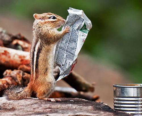 marmot news